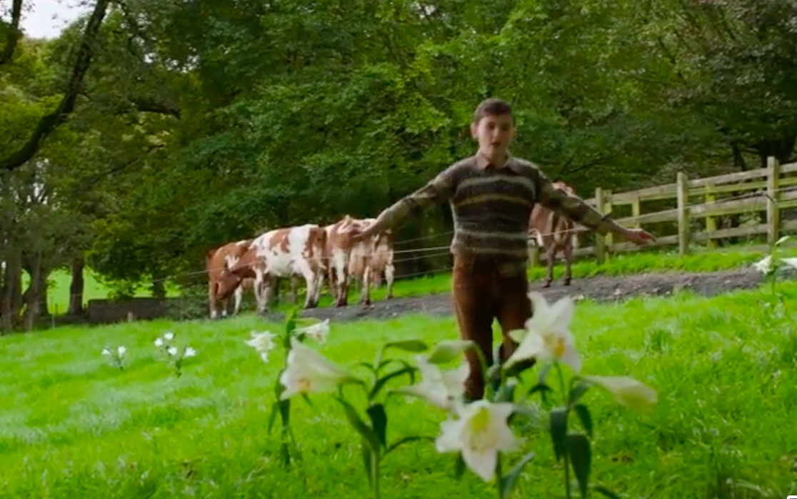 Very green grassy field with cows, a fence, and trees in the background. Young Anthony, wearing a brown sweater and brown pants, is running with his arms outstretched toward some lily-like flowers.